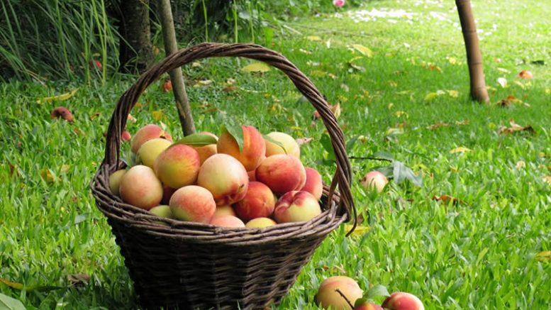 Plant rboles frutales en tu jard n y cosech frutos todo - Cuando plantar frutales ...