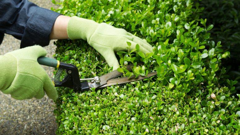 La secretar a de empleo abre un curso de formaci n profesional en - Como aprender jardineria ...